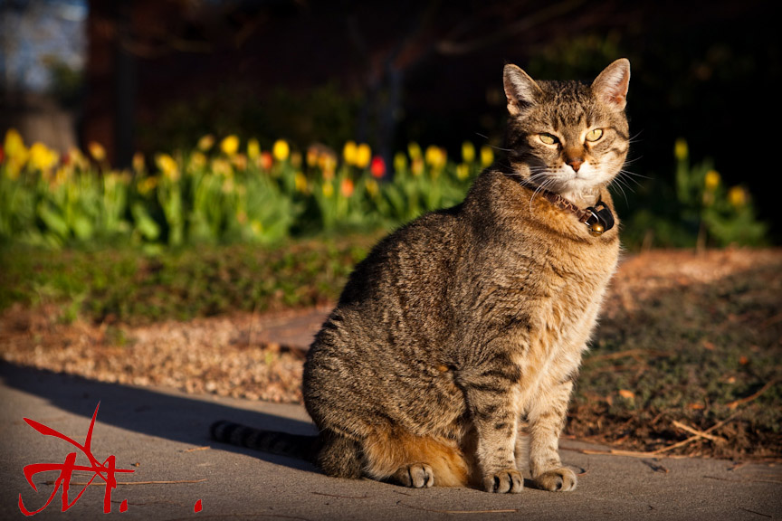 Chinle poses with tulips at sunset on Earth Day.