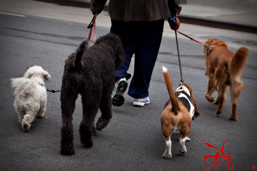 A dog walker in the city.