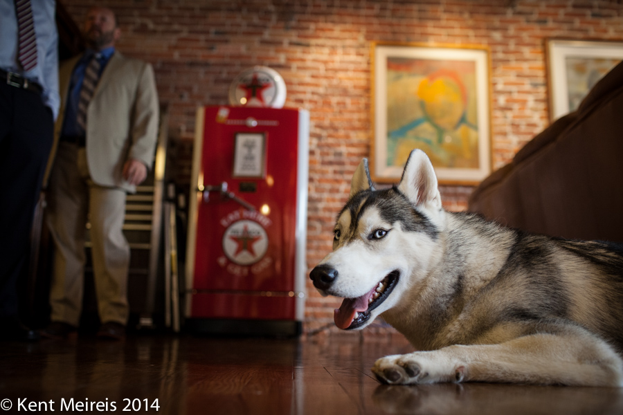 Wedding-Dog-Picture