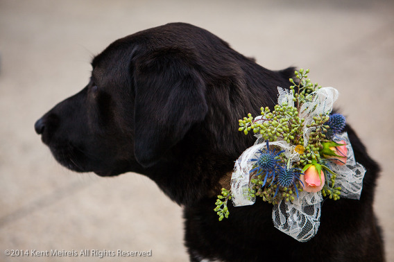 Dog-Wedding-Picture-Flowers