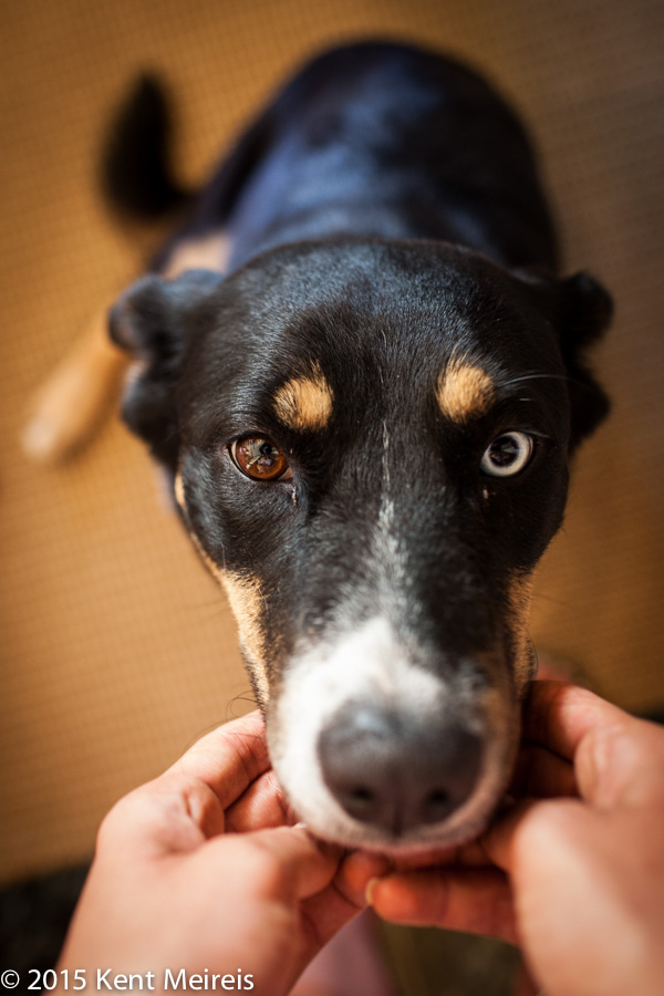 Wedding-Dog-Vail-Coloado-Picture-Blue-Eye-Brown-Picture