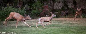 Manitou Springs Colorado Wedding Wildlife Deer Fawn
